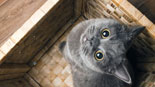 Best Cats for Apartments: The Perfect Feline Friend